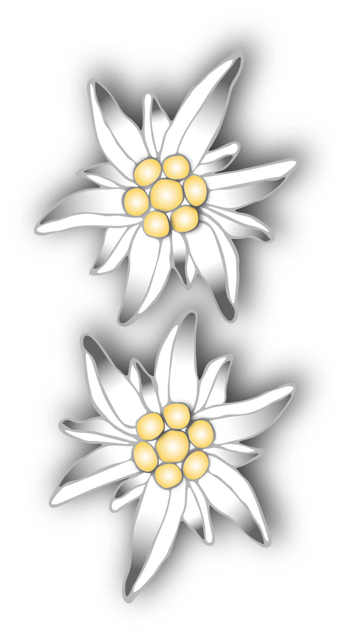 free png Edelweiss Clipart images transparent